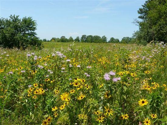 Landscape Wildflower Fields 007.jpg